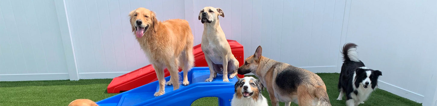 Madison Ark Pet Boarding, Doggy Daycare and Pet Grooming
