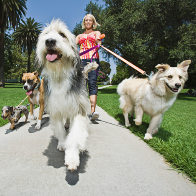 Tips For Dog Walking!
