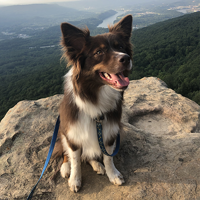 Our Favorite Dog-Friendly Hiking Trails in Chattanooga